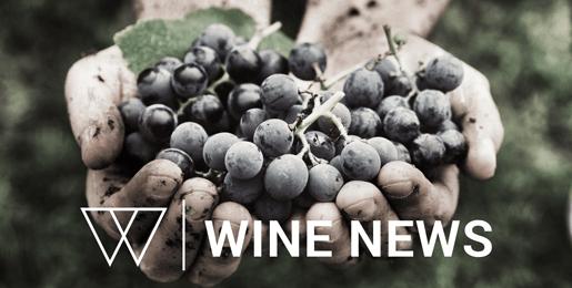 iscrizione alla newsletter winestorming